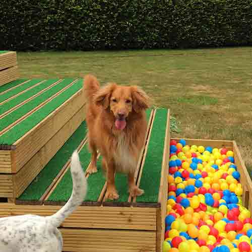 Top Dog Pet Resort And Top Cat Cattery